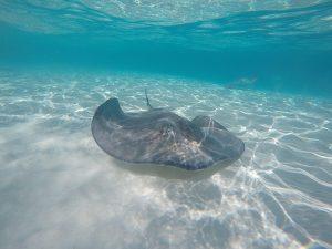 Stingray City Cayman Islands